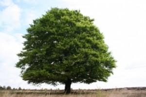 albero-d&-39;estate_21289746