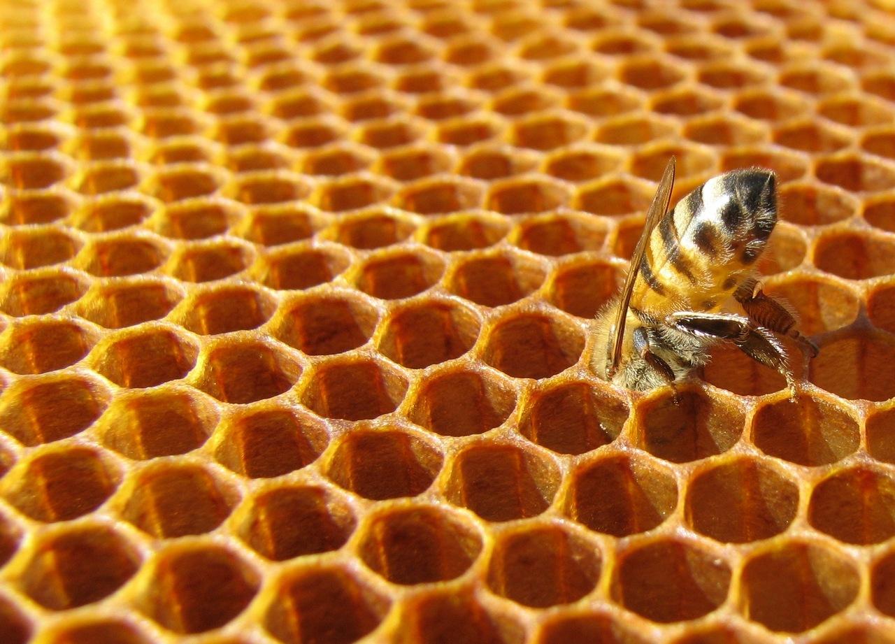 Corso di apicoltura amatoriale a for Immagini api per bambini